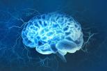 Rycina mózgu